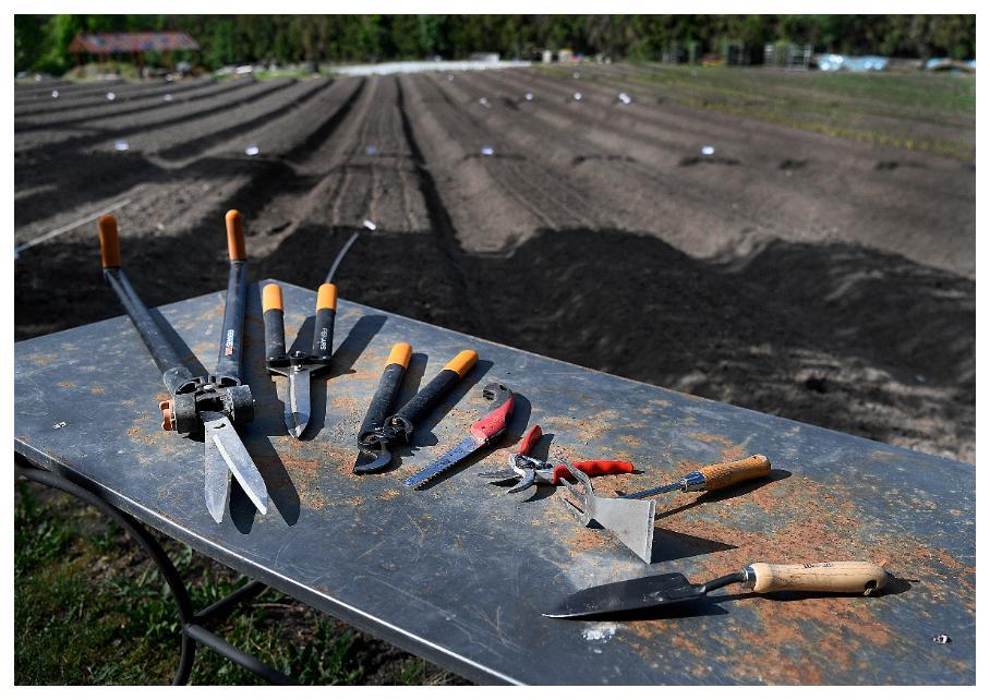 Från vänster, grässax, häcksax, busksax, grensåg, sekatör och handrensare.