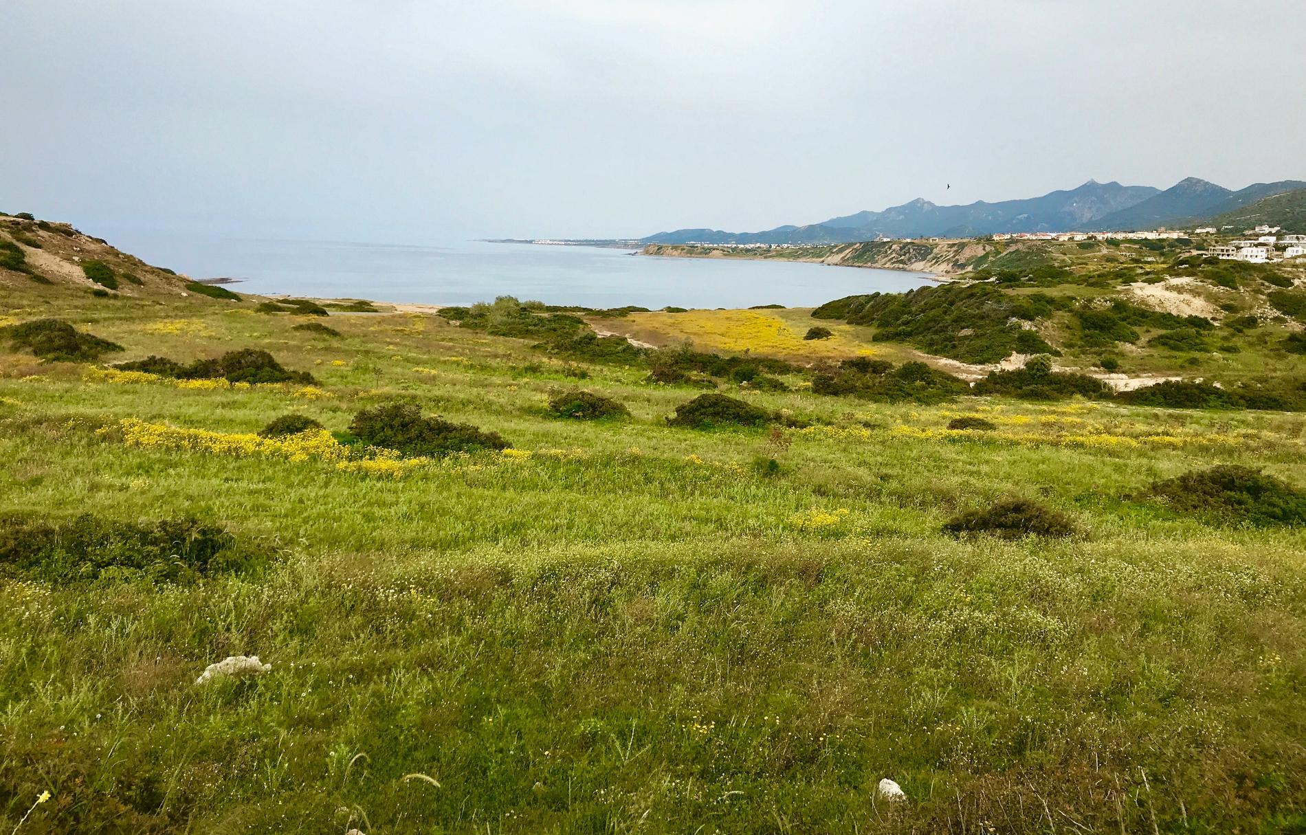 Fram till april är det grönt på ön, sedan blir det lite för varmt för gräset.