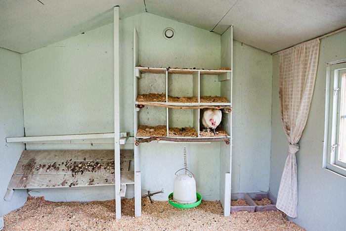 Det isolerade hönshuset håller kylan ute på vintern och minskar värmen på sommaren.