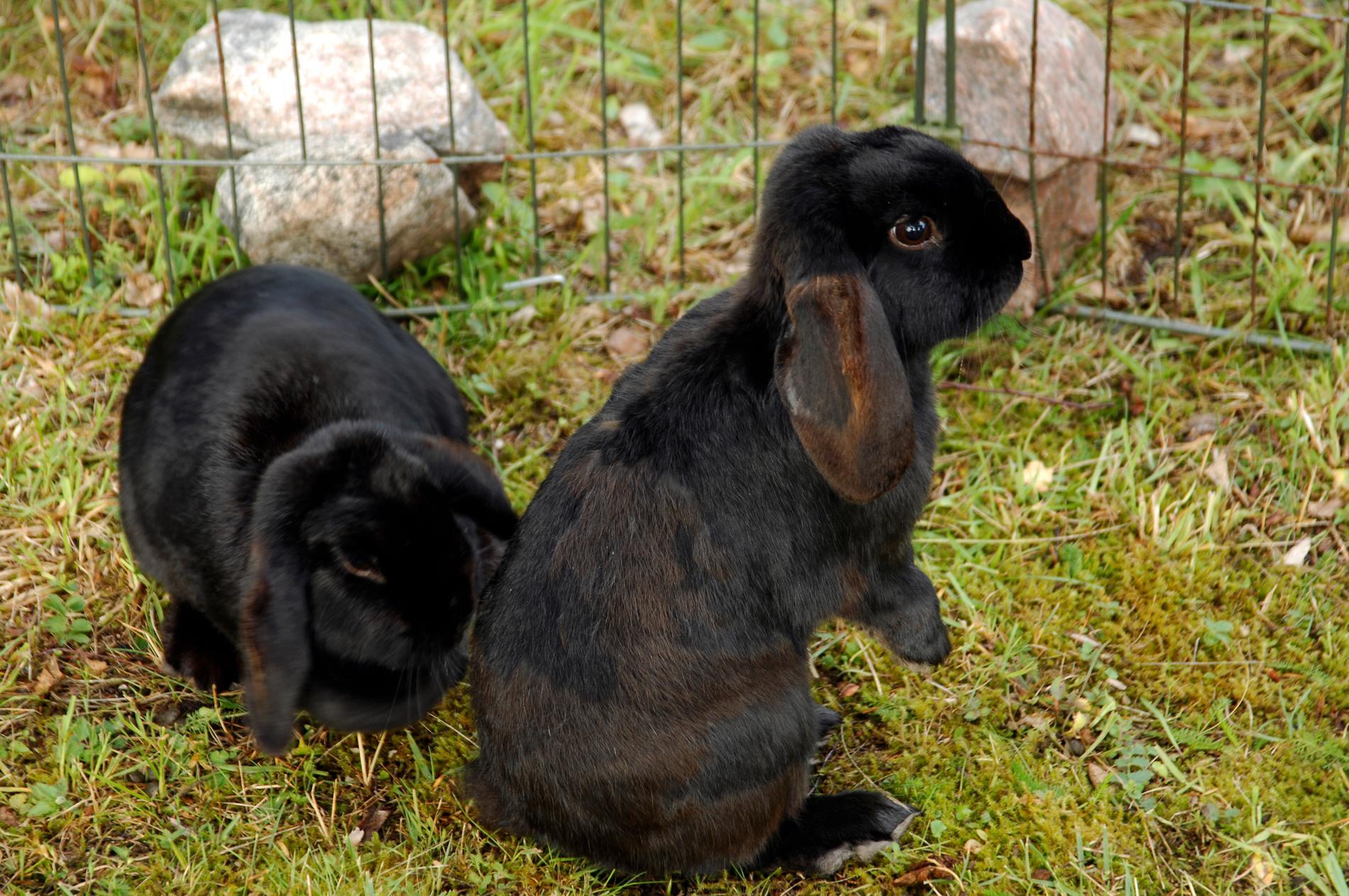 Arkivbild. Kaninerna på bilden har inget med händelsen att göra.