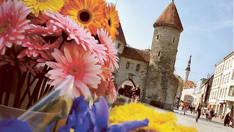 Gamla stan i Tallinn ramas in av vackra stadsmurar.