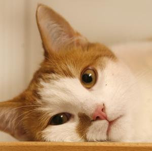 Självständig Katten klarar sig för det mesta själv. Dock bör du se till att regelbundet tömma och skura kattlådan för att din vän ska trivas hos dig.
