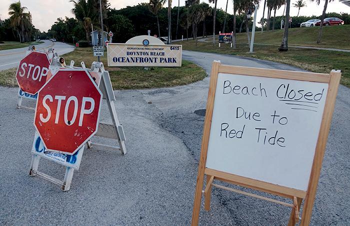 """Giftig algblomning som kallas """"rött tidvatten"""" tvingar stränder i Florida att hålla stängt."""