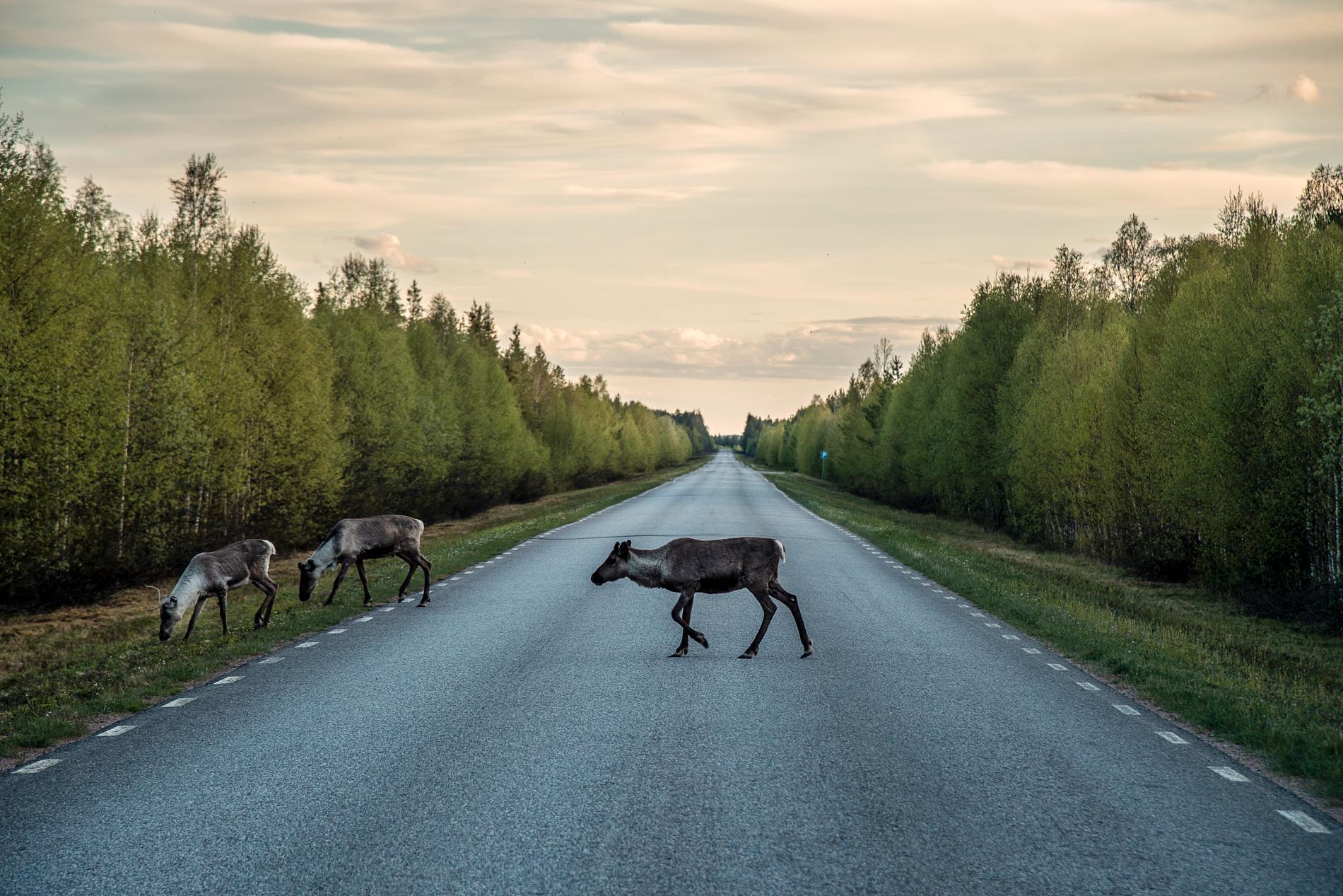 Väg 403 mellan Kaunisjoensuu och Pajala.