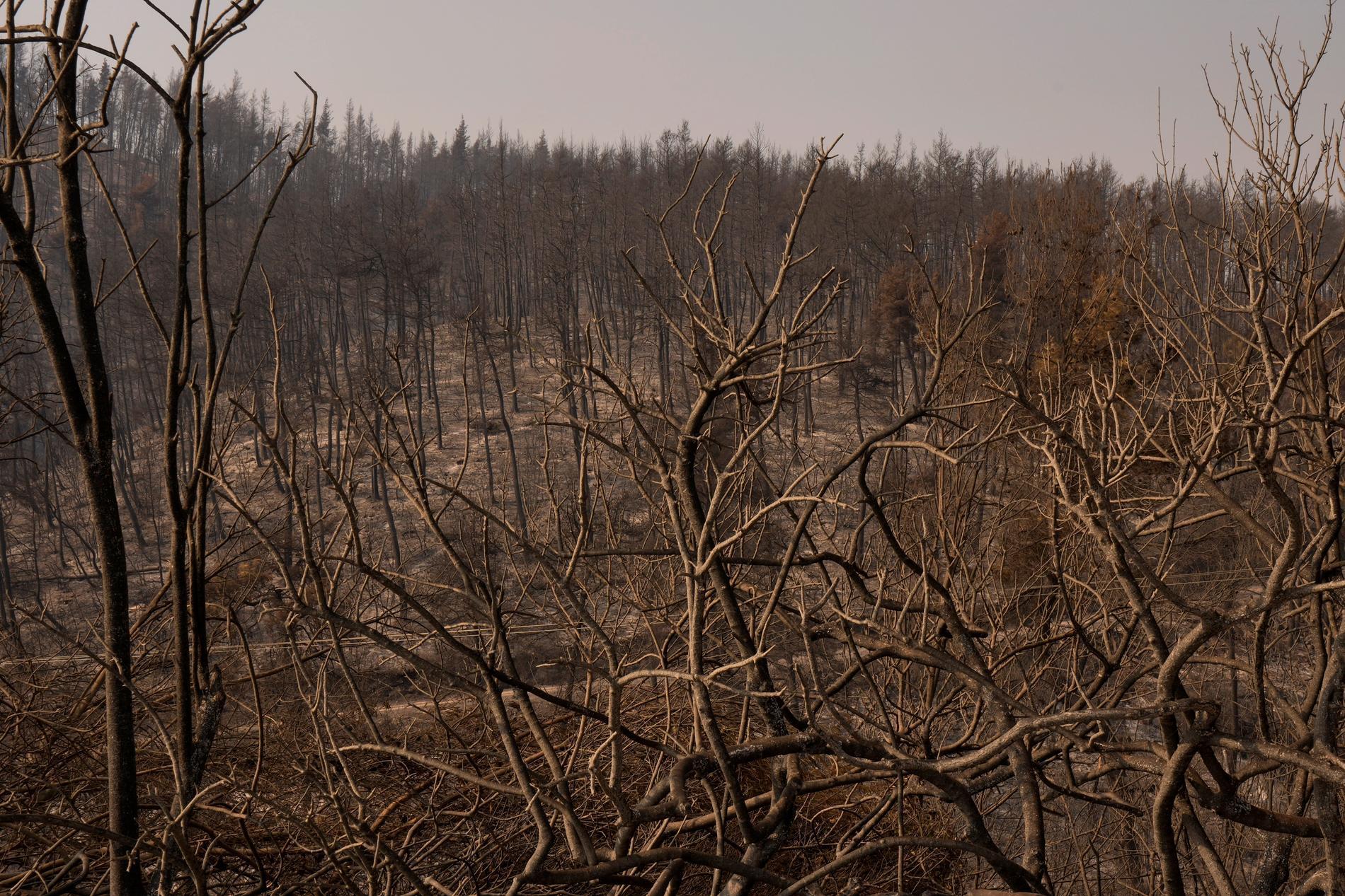 En bränd skog på ön Evia, närmare 19 mil norr om Aten.