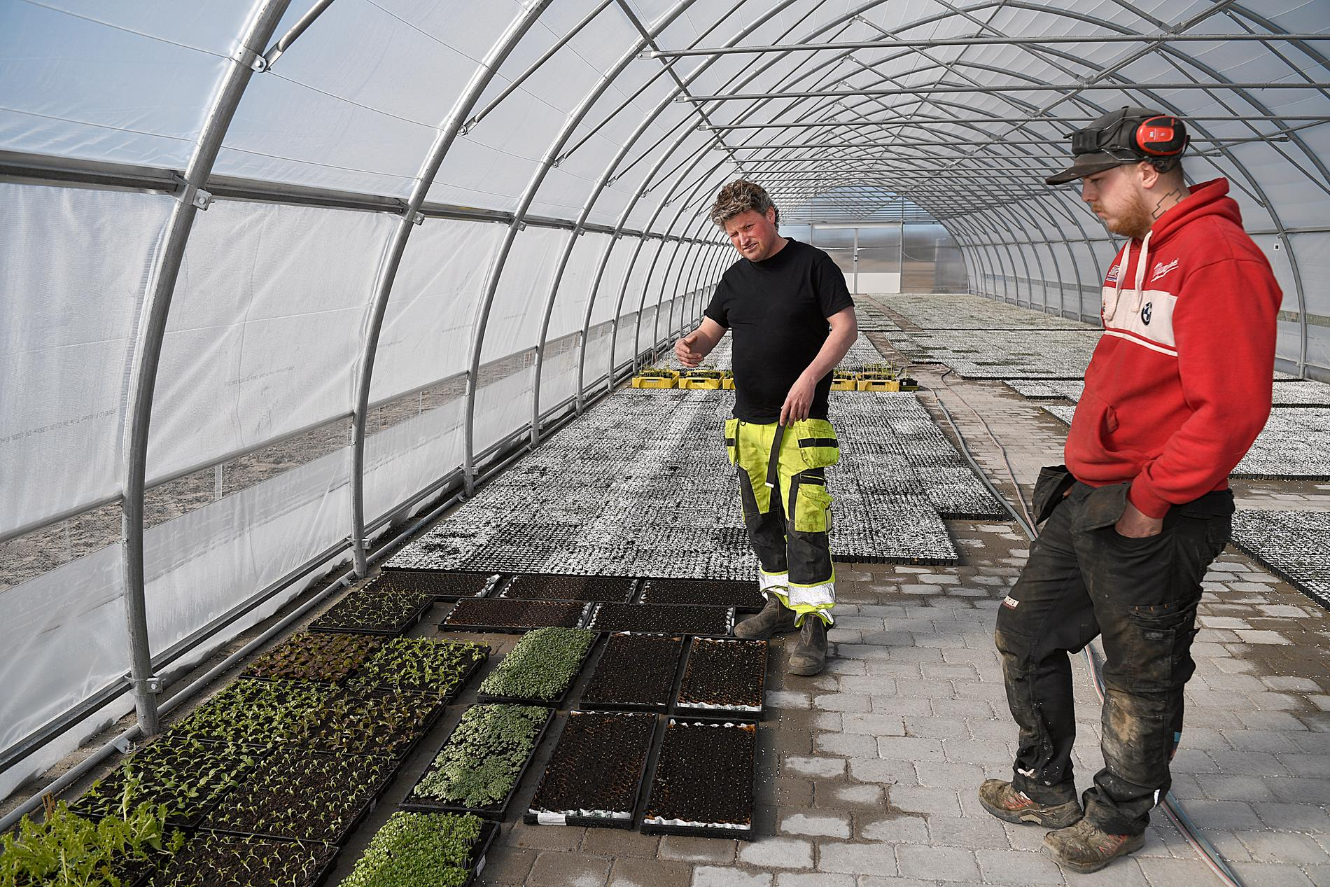 """""""Unga sitter idag framför datorn och med telefonen, man har väl blivit latare"""", säger Micke Hallberg om problemet med att hitta folk till jordbruket."""
