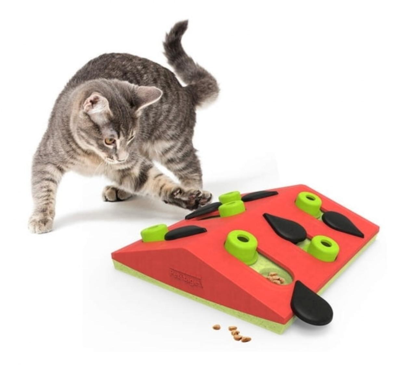 Katt som leker med aktivitetsleksak