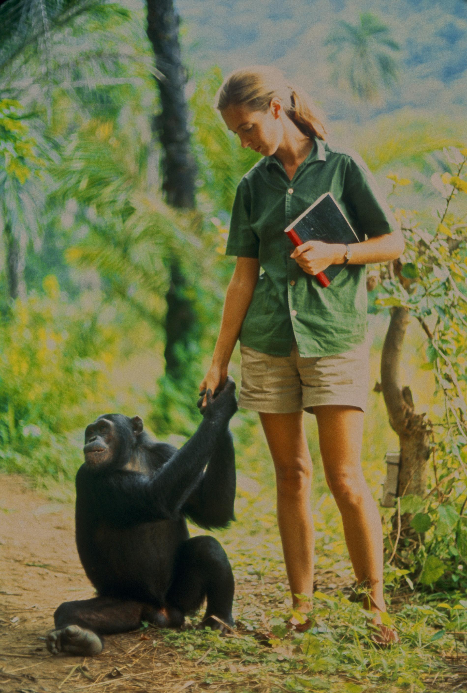 Jane Goodall: Mitt liv med schimpanserna