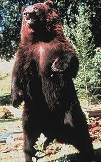 En grizzlybjörn dödade två semesterfirande campare i Alaska.