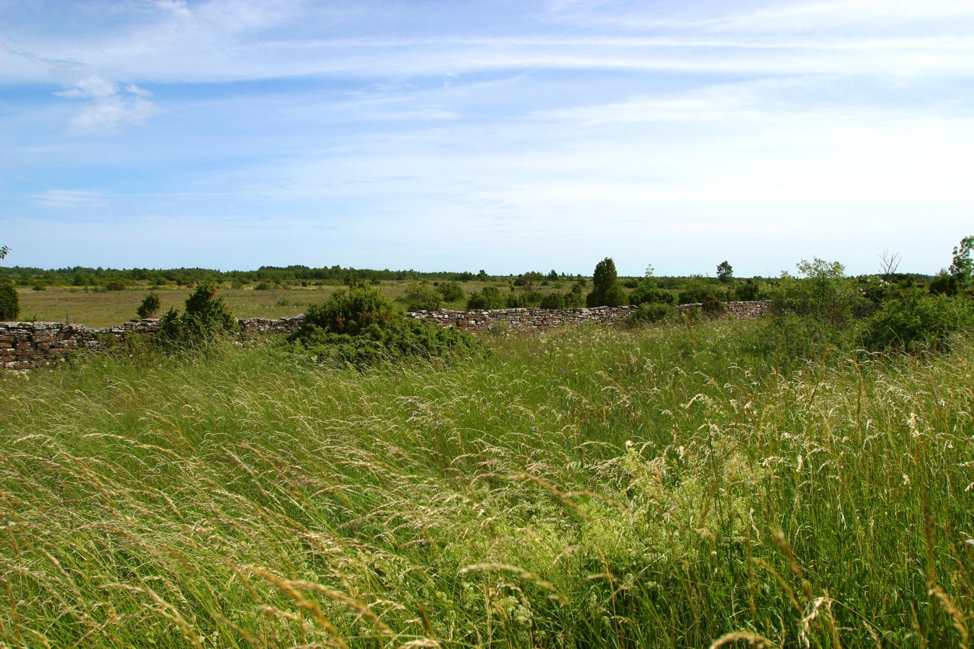 Alvaret breder ut sig på södra Öland.