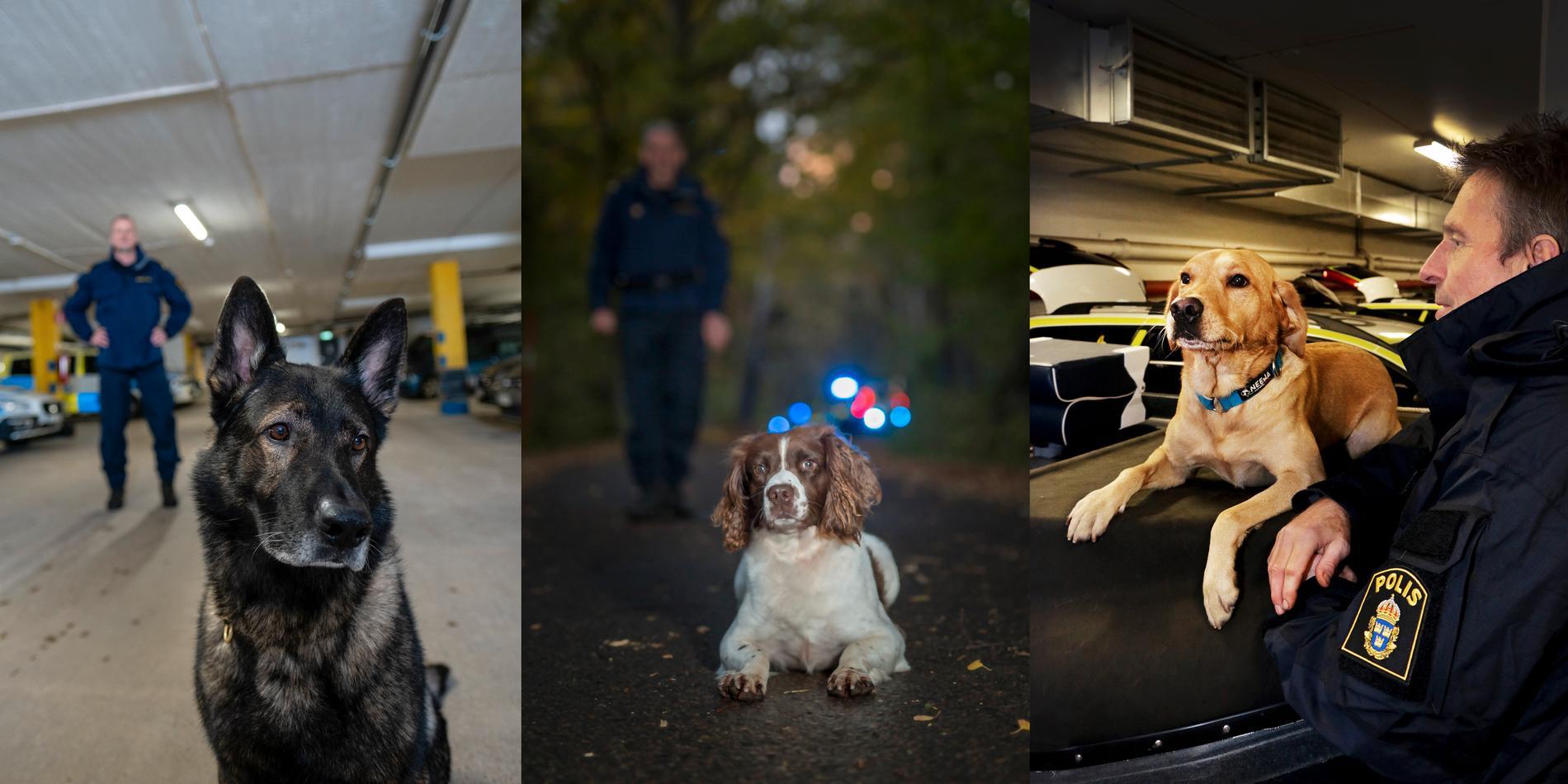 Årets polishundar 2018 är schäfern Cross, springer spanieln Ben och labradoren Ace.