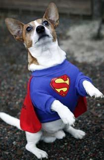 Hunden Wille blev supermänsklig.