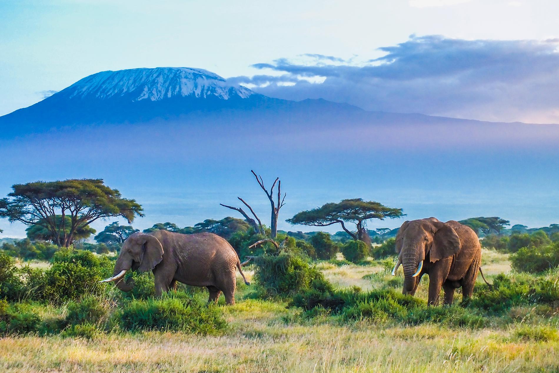 Det går att bestiga Kilimanjaro, men det krävs lite uthållighet.