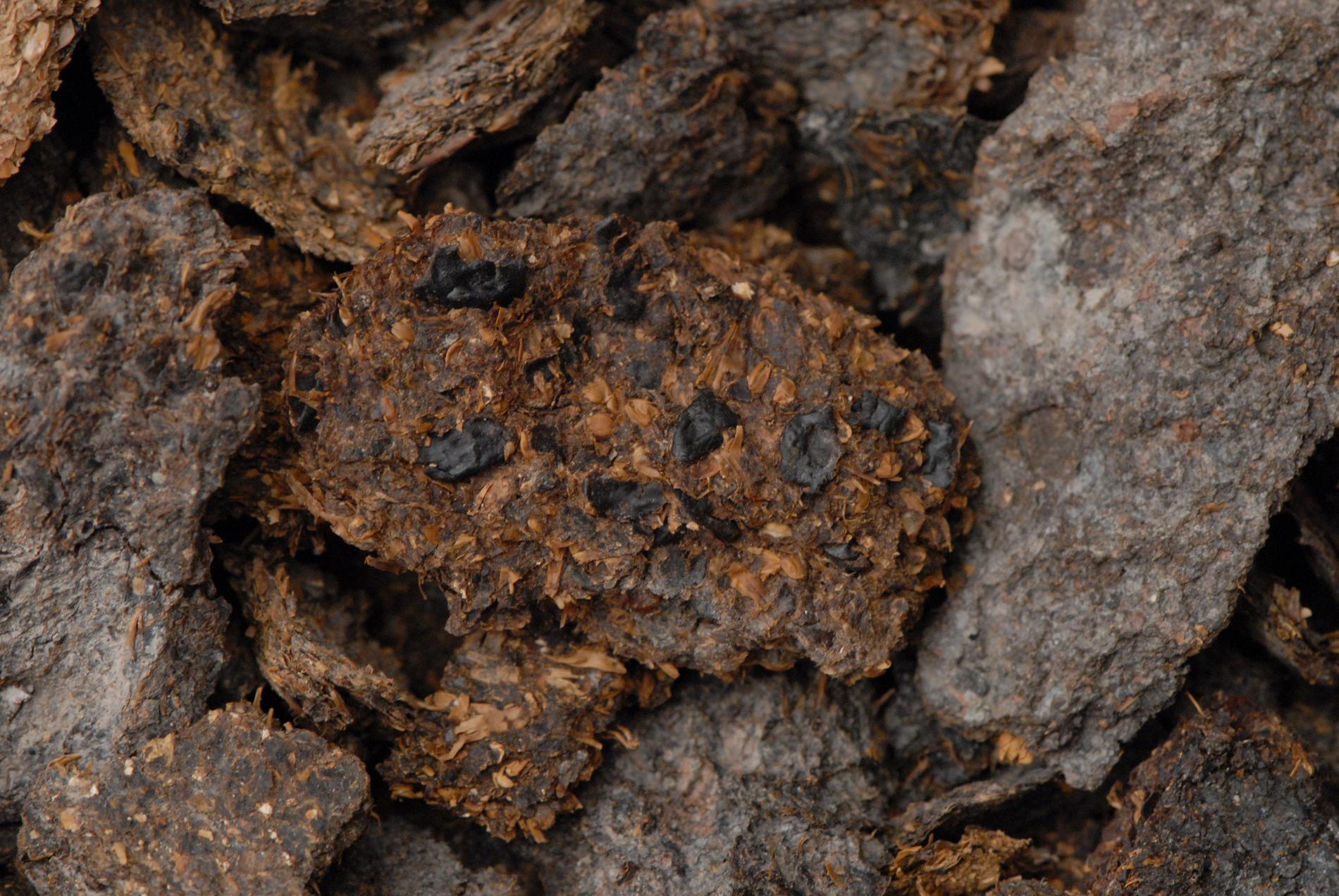 Över 2600 år gammalt bajs som har hittats i saltgruvorna i Hallstatt. Spåren av bönor, hirs och korn syns tydligt.