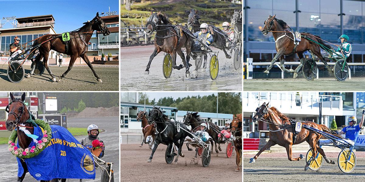 Milliondollarrhyme, Milligan's School, Who's Who, Handsome Brad, Sorbet och Moni Viking är med i Sundsvall Open Trot.