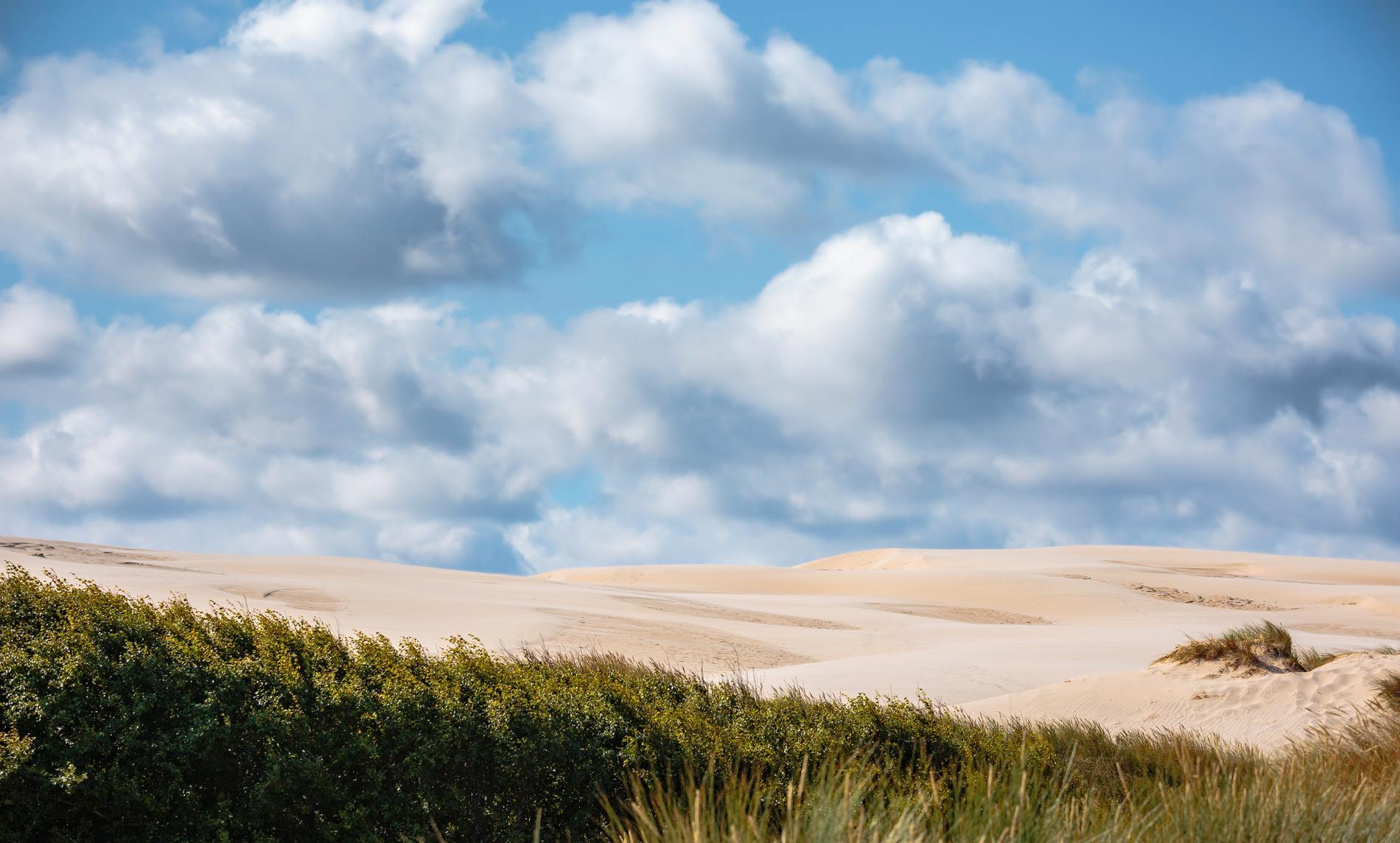 De vandrande sanddynorna Råbjerg Mile är Europas största.