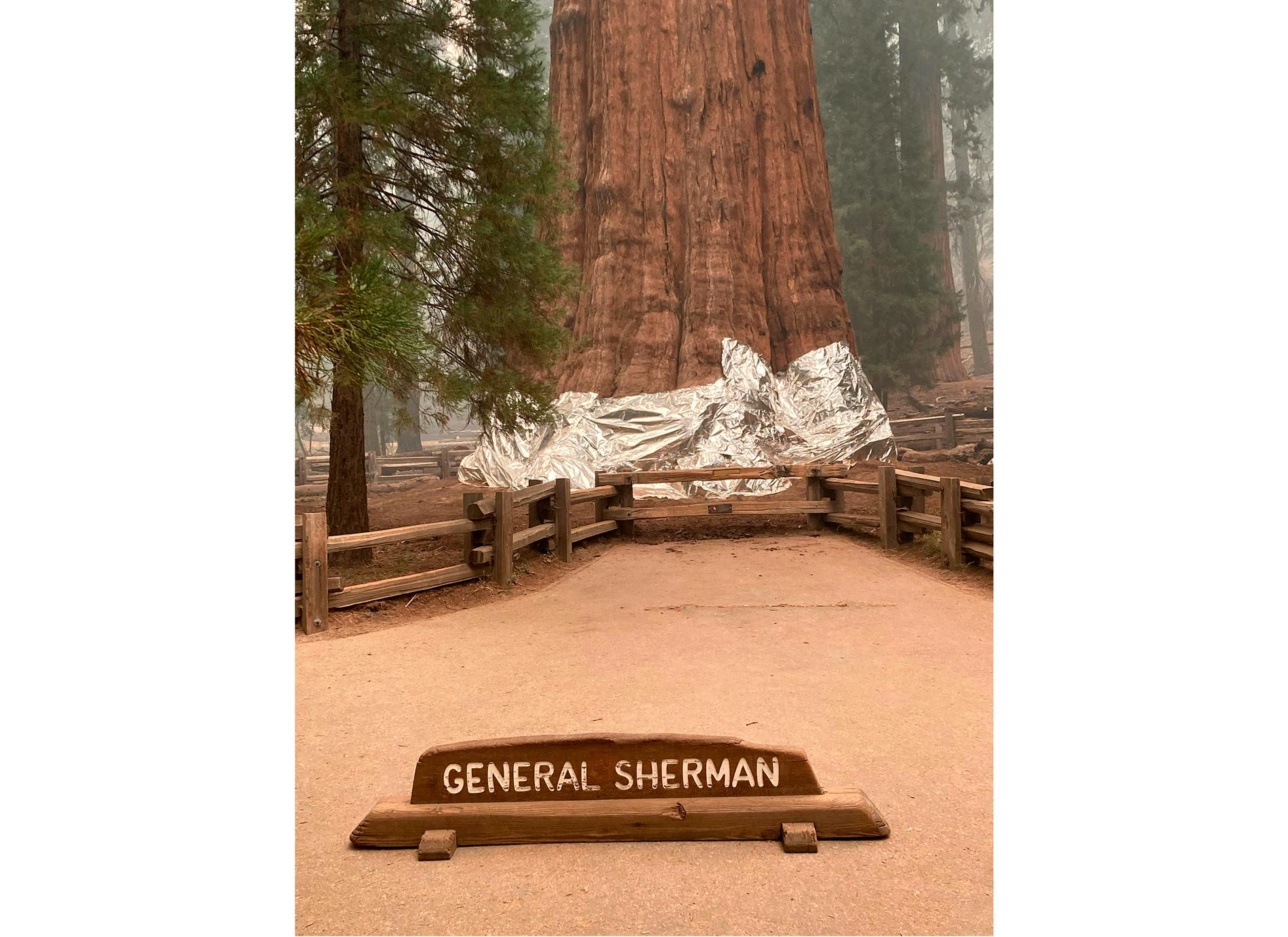 Världens största träd, General Sherman, har täckts med aluminiumfolie nedtill för att skydda stammarna från de värsta lågorna.