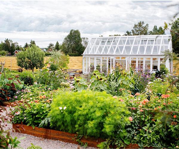 Blandad odling med växthus och pallkrage. Maria Andersson har skapat en engelsk trädgård vid sitt hem i Dalarna.