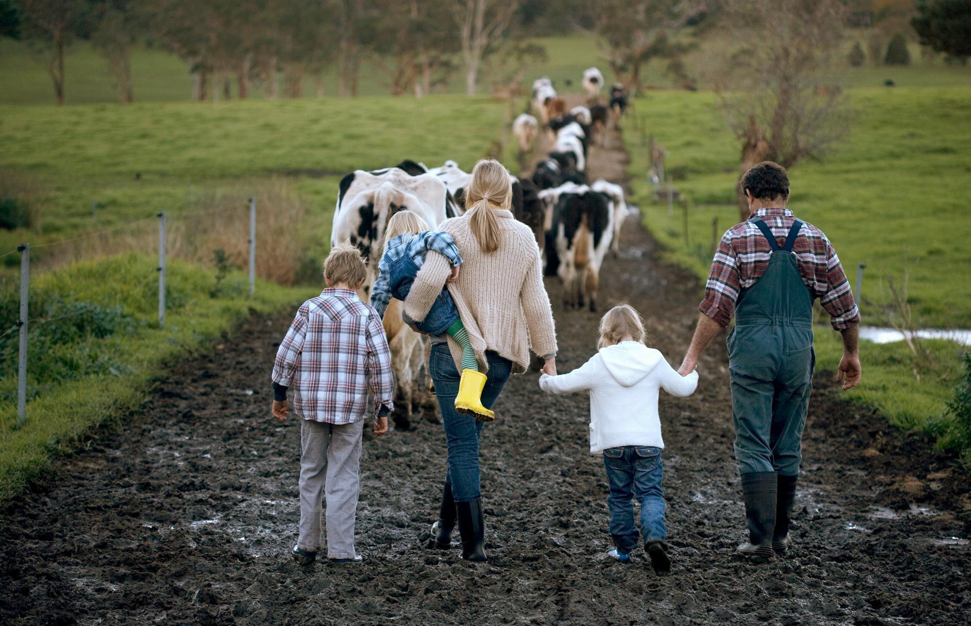 Familjepromenerad med kor.