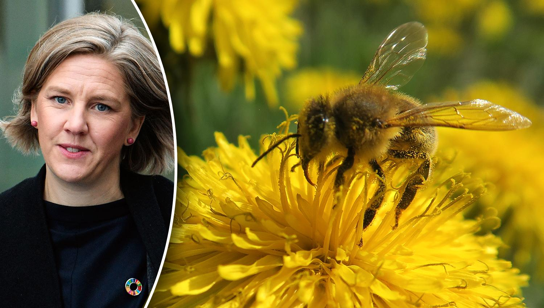 Utan pollinerande insekter har vi ingen mat. Därför behöver insatser för att rädda bin och humlor få kosta. Det är livsviktigt, skriver debattören.