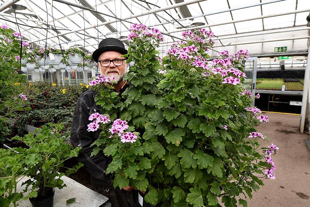 Välj en stor kruka. Ju mer jord desto bättre trivs växterna, säger trädgårdsmästare Bosse Rappne.