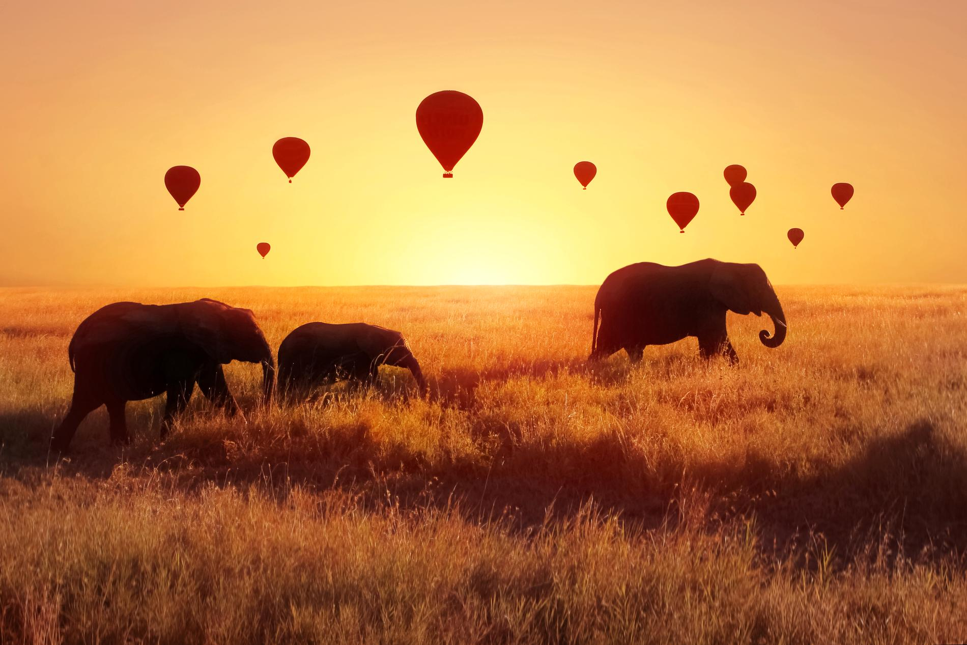 I Serengeti finns många olika djur att bevittna.