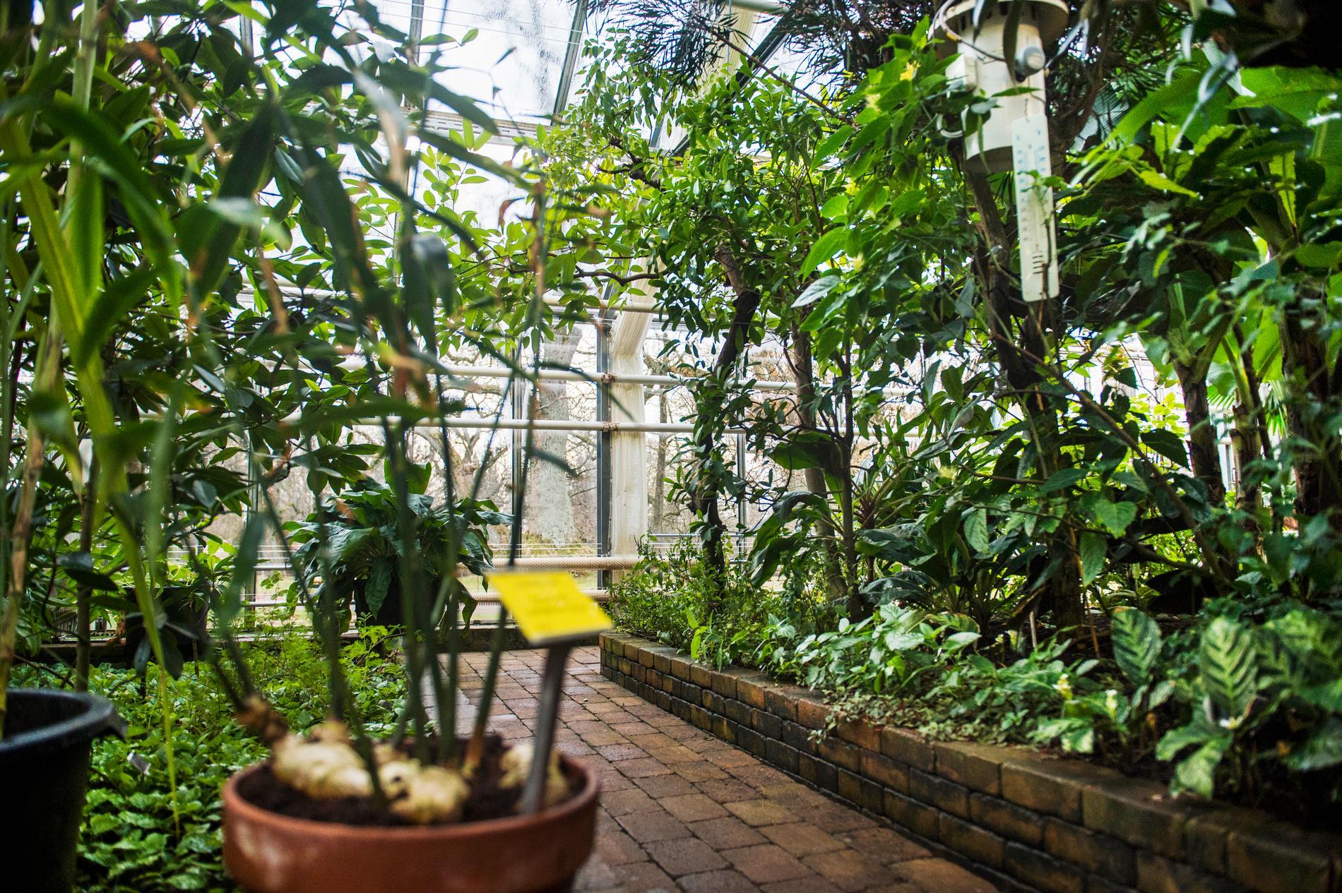 Över tusen olika växtarter ska rymmas i det nyrenoverade växthuset. Arkivbild.
