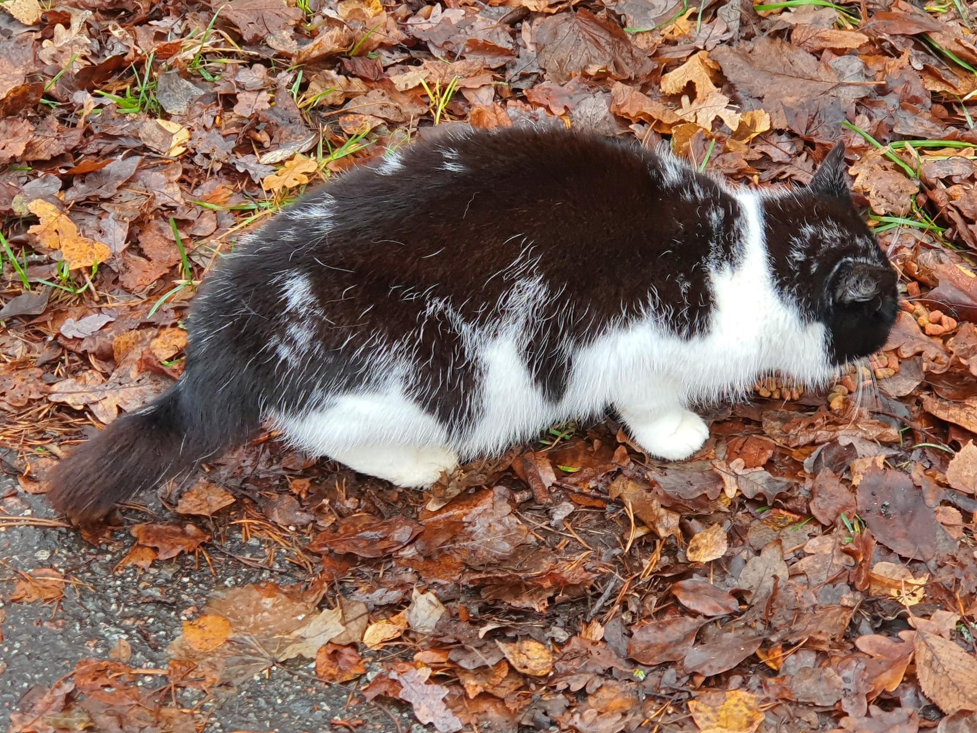 Efter sju år som bortsprungen kunde katten Elvira komma till sin ägare.