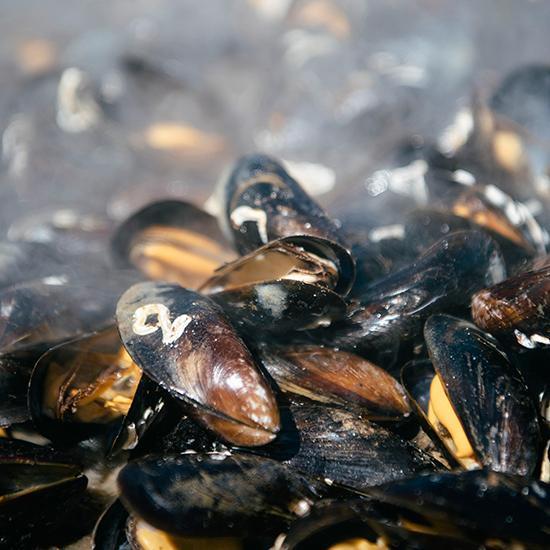 NYA RÄTTER. – Just nu håller vi på att ta fram nya sätt att servera musslor på, som musselburgare och nuggets. Eftersom musslor är så klimatsmart, är jag övertygad om att det är här vi har en stor del av framtidens mat, säger Janne Bark.