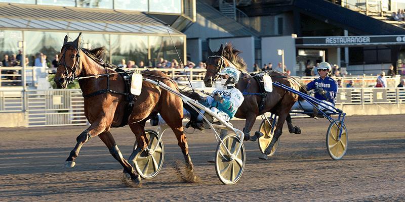 Born Unicorn spikas av Sportbladets Casper Hedberg i jakt på jackpott-miljonerna på V75.