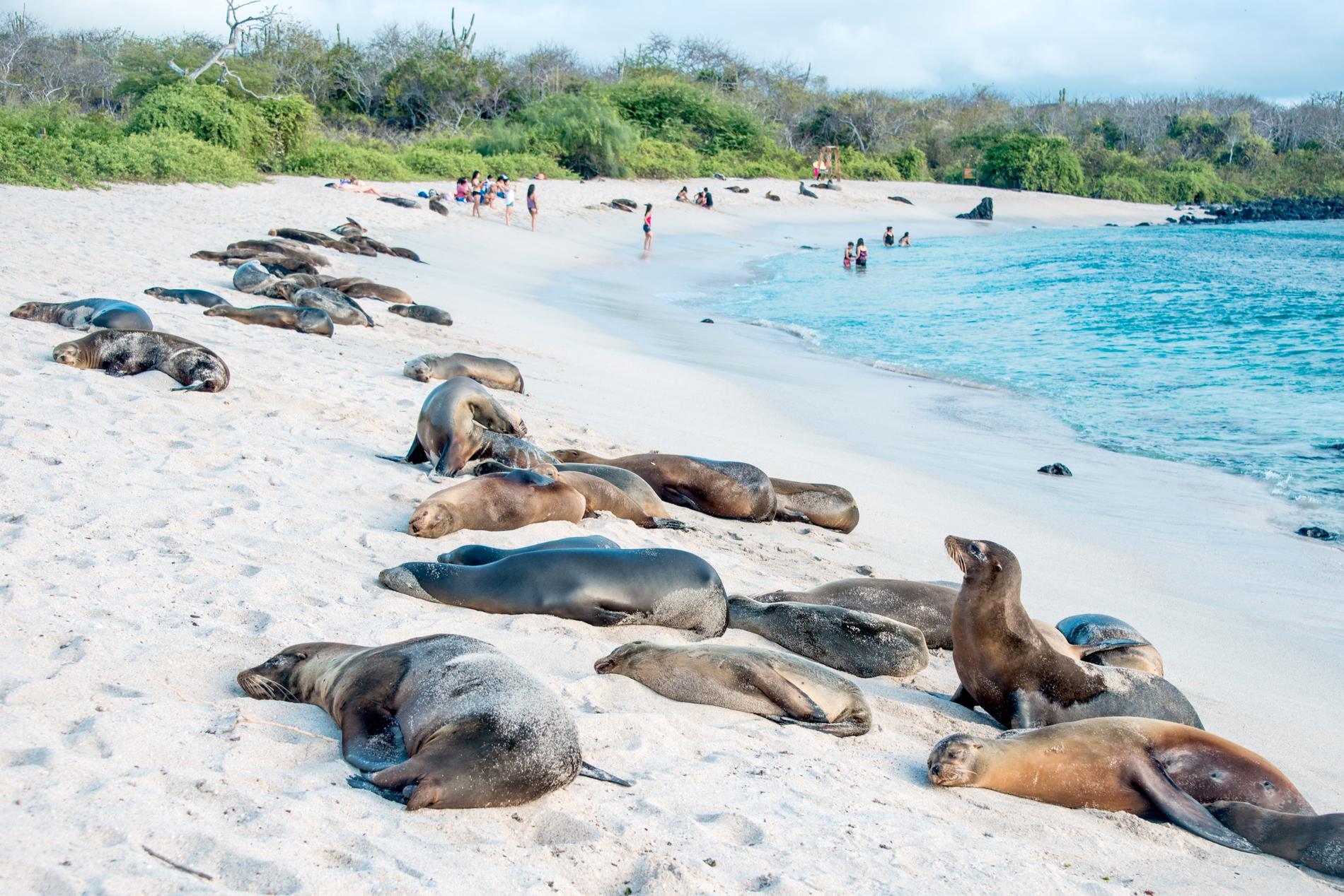 Galapágos är känd för sitt unika ekosystem.