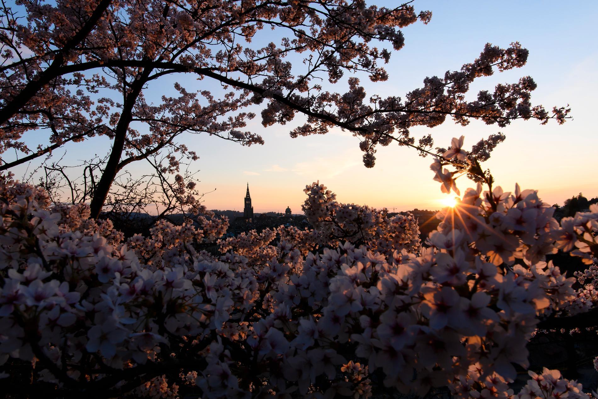 Solnedgång i Bern.